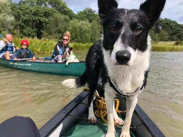 Dog Friendly Kayaking